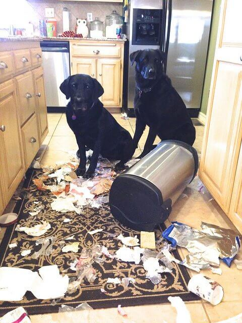 Avoid coming home to mischief by using a dog-proof trash can.