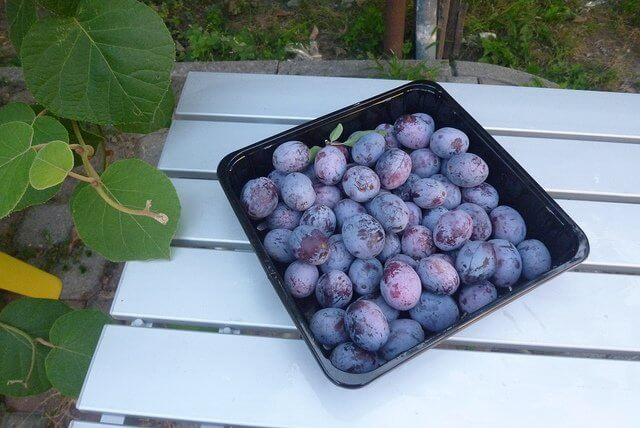 Dried plums are a traditional and effective remedy for constipation.