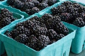 Buy all the blackberries. Then freeze them!
