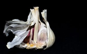 bulb of garlic on black background
