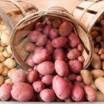 You too can turn the humble potato into versatile potato flour.