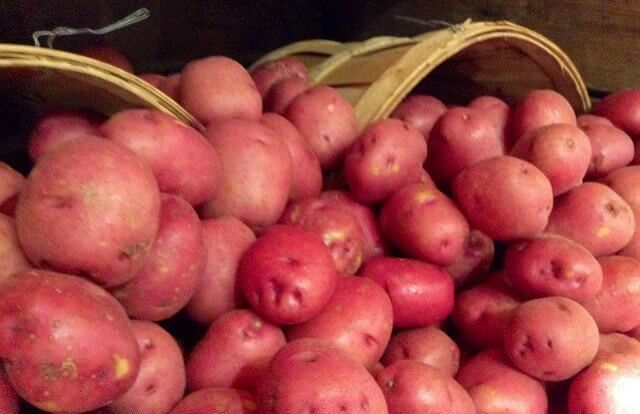 Red potatoes are my favorite but they're not the best for long term storage.