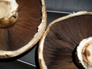 Mushrooms are delicious and so good for you. Get your own dehydrator and dry your own!