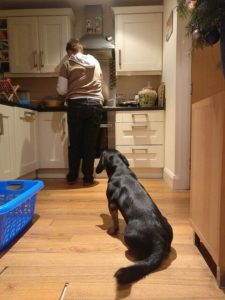 We all love our pooches, but they can make a mess in the kitchen.