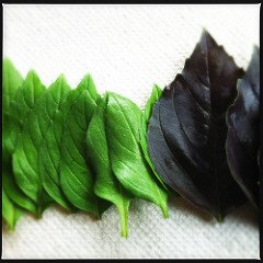 Buy herbs when they're fresh and abundant. Dry them for year-round use!