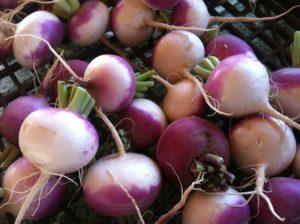 bunch of unpeeled turnips