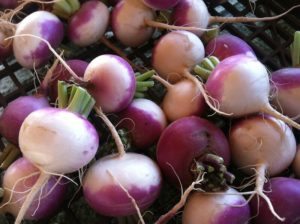 a pile of purple and white turnips with green tops