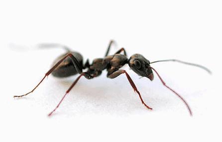 ant on white floor
