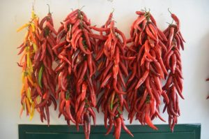 bunches of hot chili peppers hanging to dry against a white wall